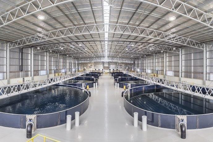 barramundi fish growing tanks